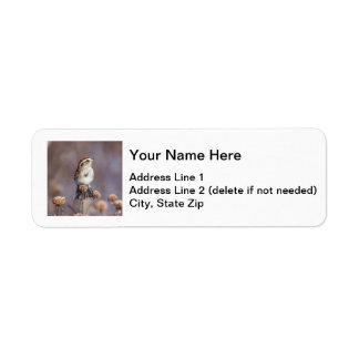 Gorrión de árbol americano etiquetas de remite