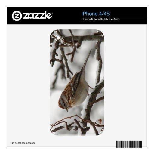 Gorrión de árbol americano calcomanía para el iPhone 4S