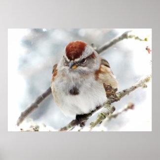 Gorrión de árbol en invierno impresiones