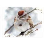 Gorrión de árbol en invierno tarjetas postales