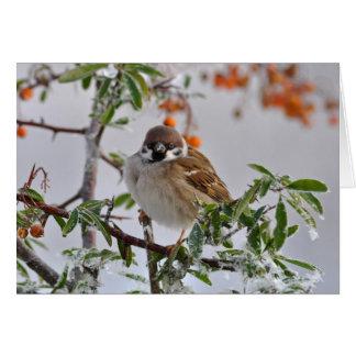 Gorrión de árbol eurasiático en invierno tarjeta de felicitación