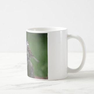 Gorrión de árbol eurasiático taza