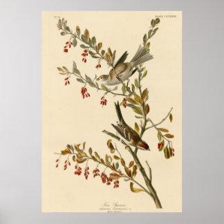 Gorrión de árbol póster