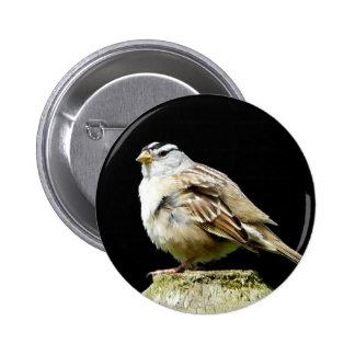 Gorrión de canción coronado blanco pin redondo 5 cm