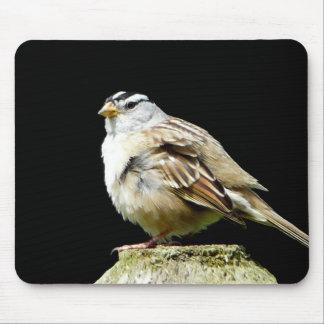 Gorrión de canción coronado blanco mouse pad