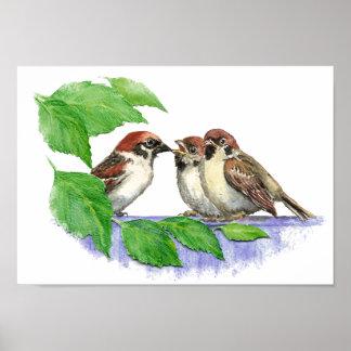 Gorrión de canción lindo, pájaro, jardín, naturale póster