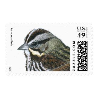 Gorrión de canción (M.m.pusillula) Timbre Postal