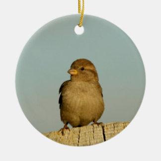 Gorrión de casa femenino lindo adorno navideño redondo de cerámica