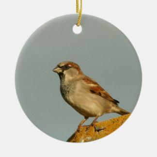 Gorrión de casa masculino lindo adorno navideño redondo de cerámica