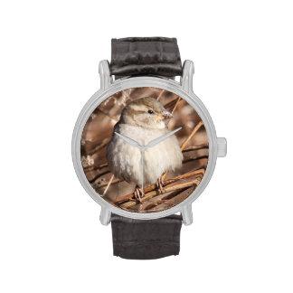 Gorrión de casa relojes de mano