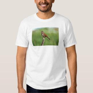 Gorrión de Fox Camisas