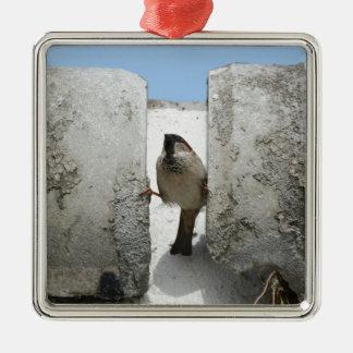 Gorrión de muro adorno cuadrado plateado