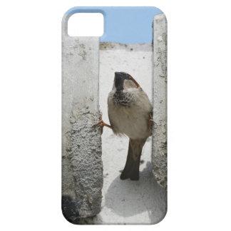Gorrión de muro iPhone 5 fundas