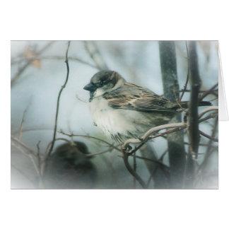 Gorrión del invierno tarjeta de felicitación