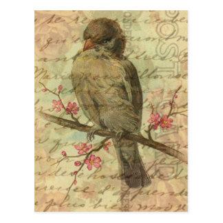 Gorrión del vintage tarjeta postal
