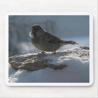 Gorrión en la nieve alfombrillas de ratones