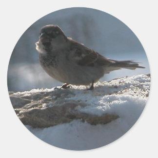 Gorrión en la nieve pegatinas redondas