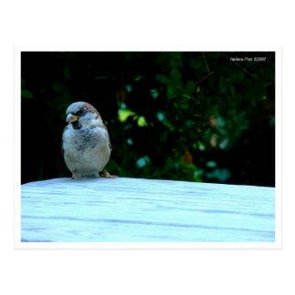Gorrión en la postal de la tabla