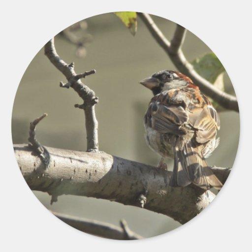 Gorrión en una rama pegatina redonda