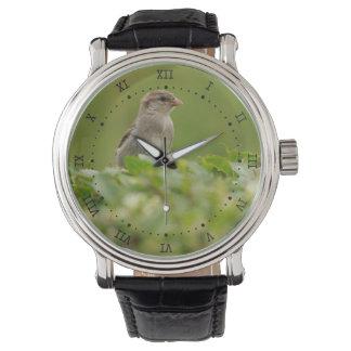 gorrión en verde relojes de mano