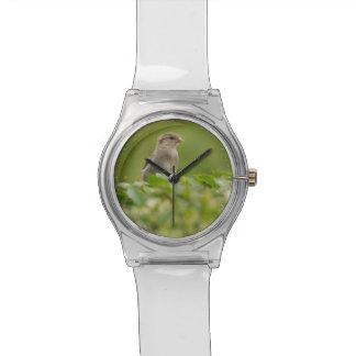 gorrión en verde relojes de pulsera