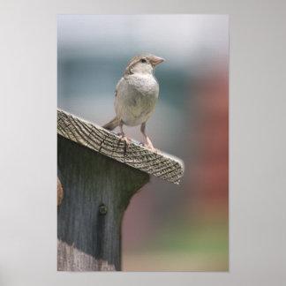 Gorrión encima de su poster del Birdhouse