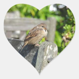 Gorrión fresco pegatinas corazon