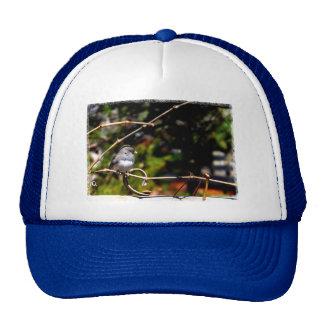 Gorrión Oscuro-Observado del Junco en rama Gorras