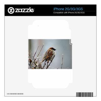 gorrión-pájaro-animal-naturaleza calcomanías para el iPhone 3GS