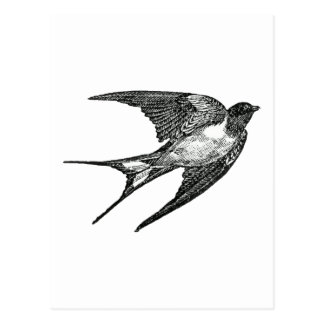 gorrión tarjetas postales