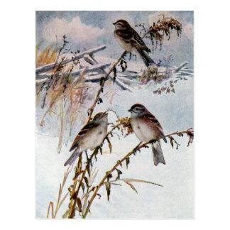 Gorriones de árbol en invierno postales
