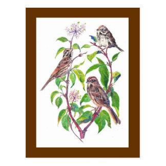 Gorriones de canción, pájaros lindos, naturaleza,  postal