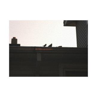 Gorriones de casa en un tejado 1 impresión en lienzo estirada