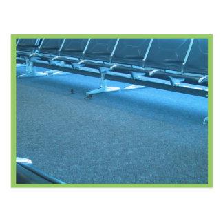 Gorriones en el aeropuerto internacional de Denver Tarjeta Postal