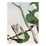 Gorriones japoneses verdes no.2 tarjeta postal