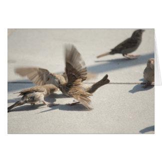 gorriones que luchan tarjeta pequeña