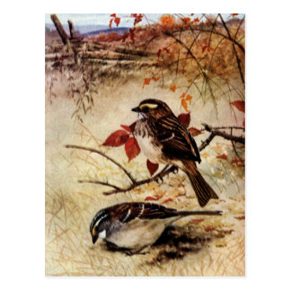 Gorriones y hojas Blanco-Throated de la caída Postales