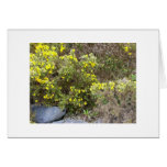 Gorse and Rocks Greeting Card