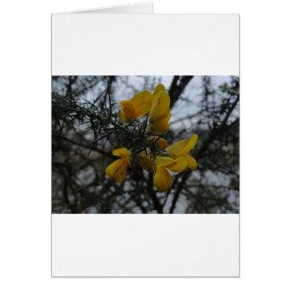 Gorse Flowers Card