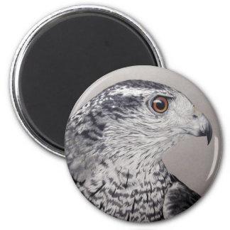 Goshawk Magnet Magnet