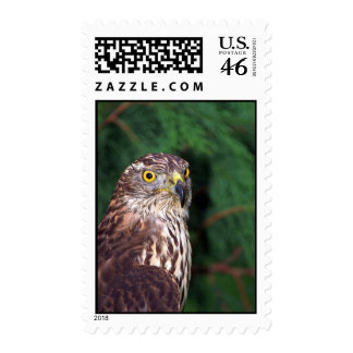 Goshawk Stamps