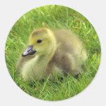 Gosling Classic Round Sticker