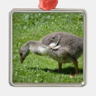 Gosling gris adorno navideño cuadrado de metal