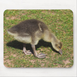 Gosling Mouse Pad