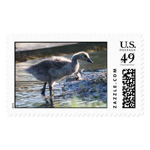 Gosling Stamp