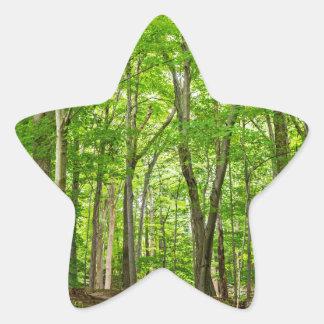 Gosnell Big Woods Webster, NY Star Sticker