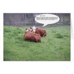 Gossip Cows Cards
