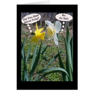 Gossiping Daffies Photography Humor Cards