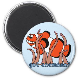 Got Anemone Clownfish Magnet