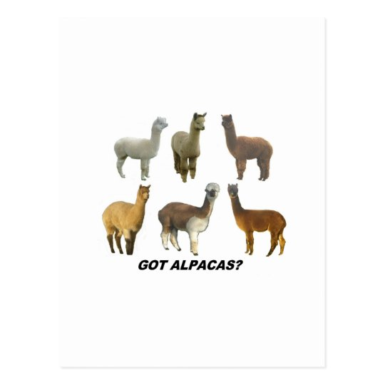 Got Apacas? Postcard